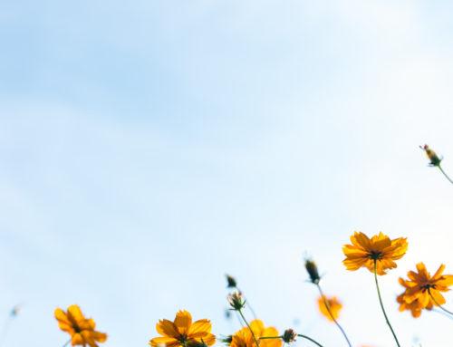 Les remèdes naturels pour accompagner le printemps